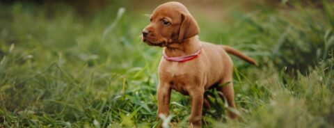 7 Tips Puppy Training